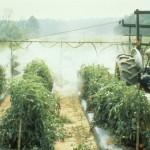 لیست مجاز آفتکش نباتی کشور